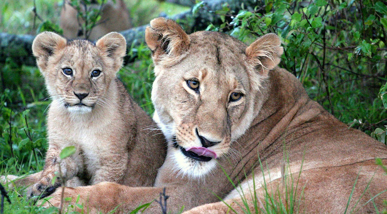 Best African Safari Photography for Wildlife Photography blogs