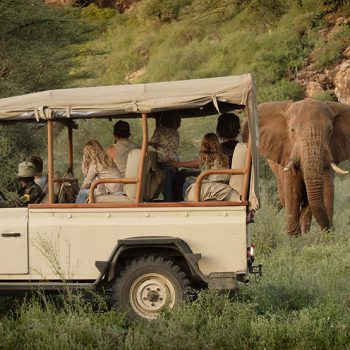 African Safaris Family Game Drive
