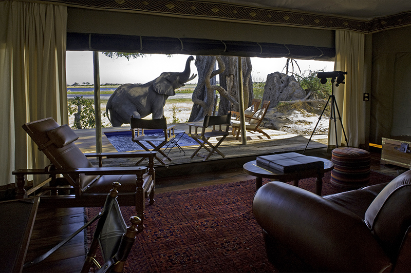 African Luxury Safari