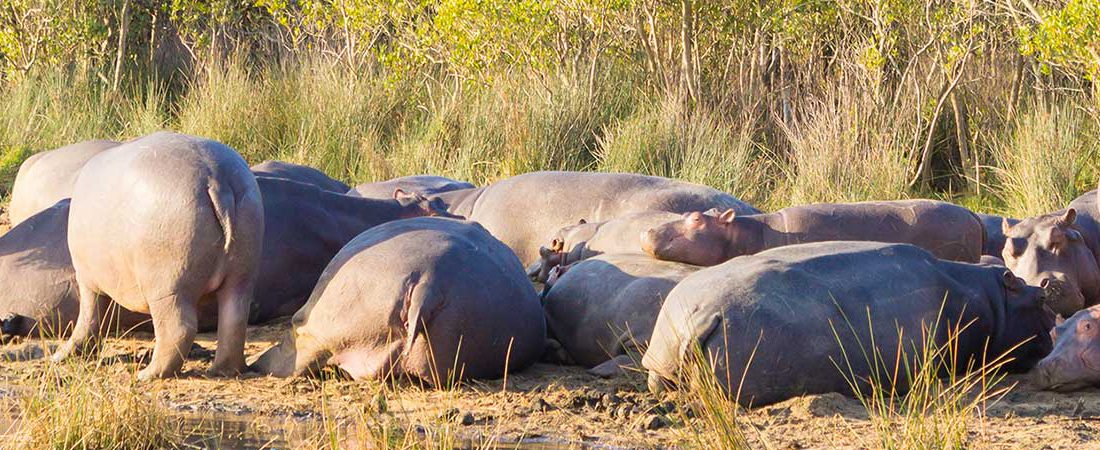 Botswana Holiday Destination