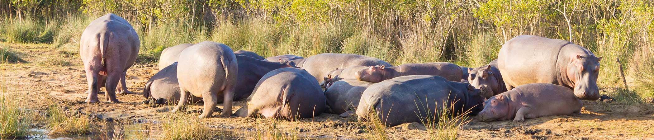 Botswana Holiday Destination